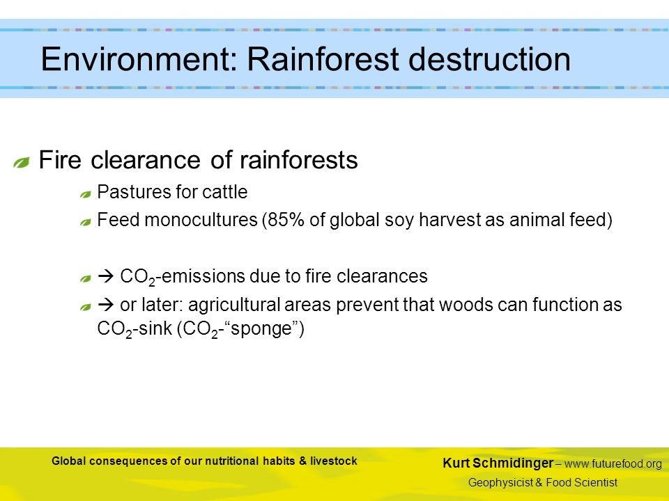 Environment: Rainforest destruction