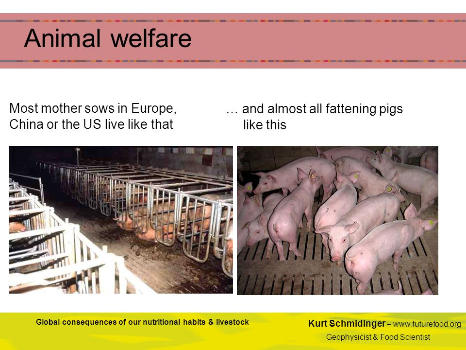 Animal welfare Most mother sows in Europe, China or the US live like that. … and almost all fattening pigs like this.
