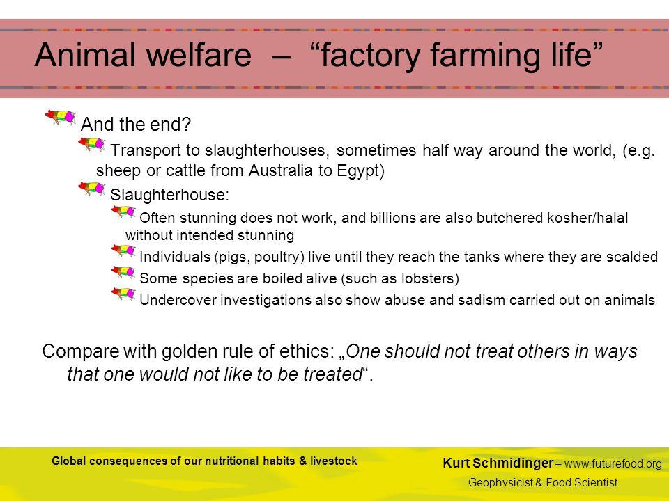 Animal welfare – factory farming life