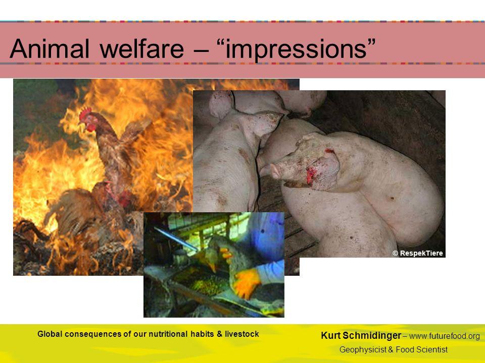 Animal welfare – impressions