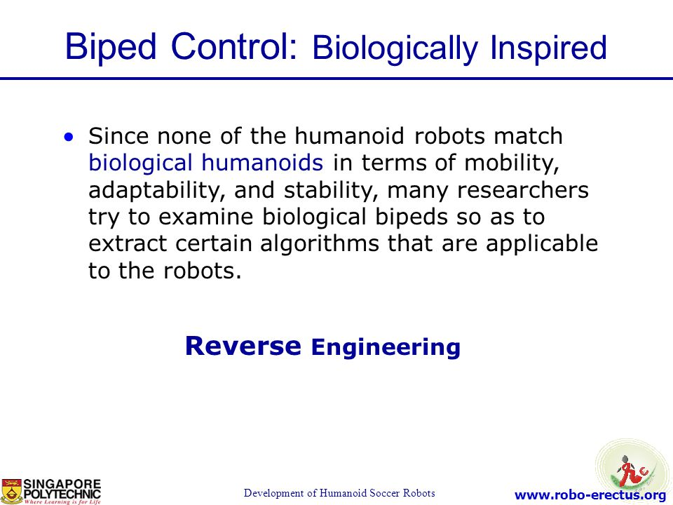 Biped Control: Biologically Inspired