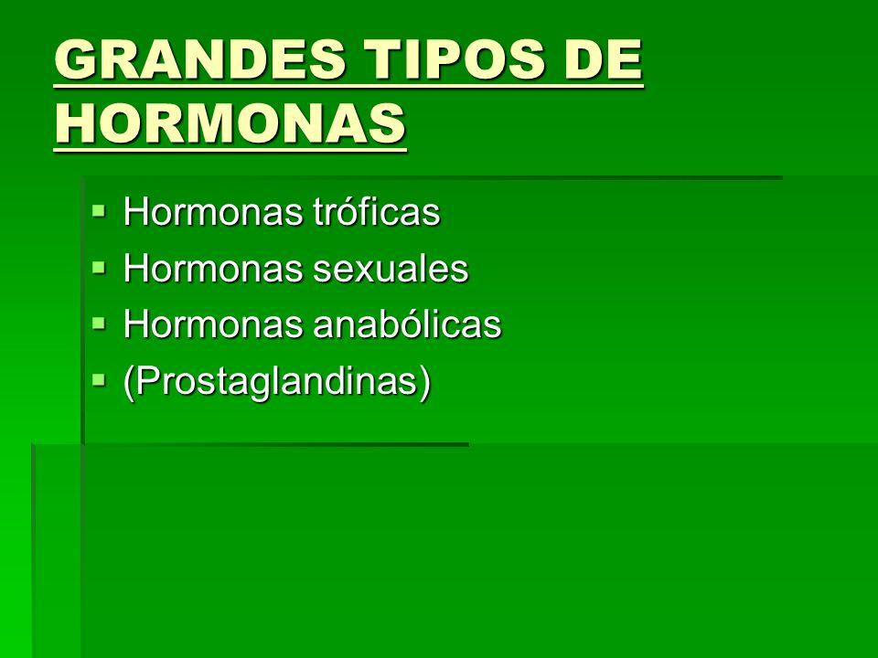 GRANDES TIPOS DE HORMONAS