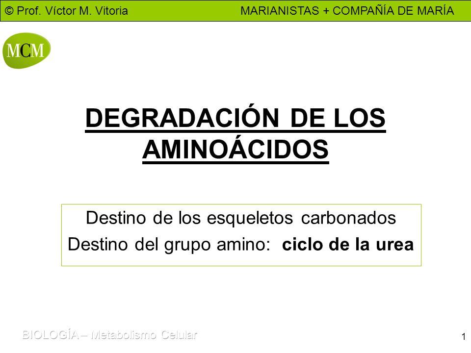 DEGRADACIÓN DE LOS AMINOÁCIDOS