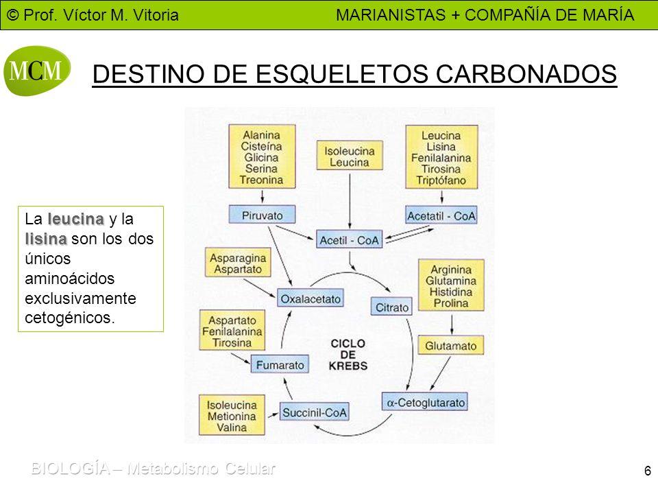 DESTINO DE ESQUELETOS CARBONADOS