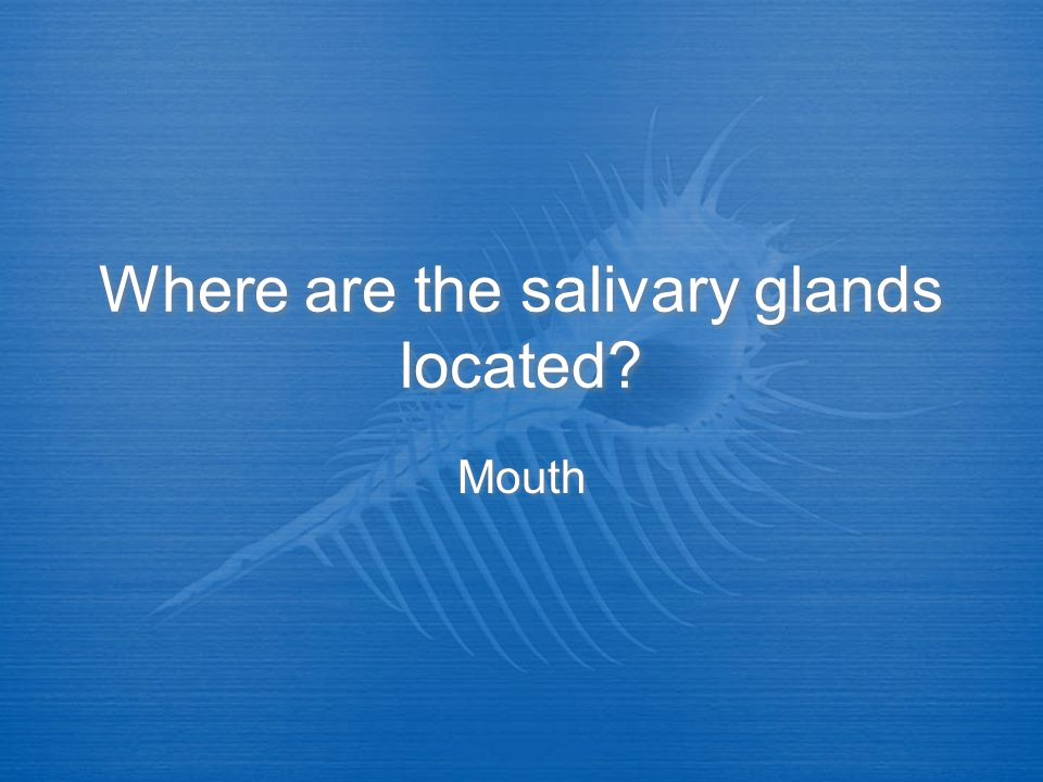 Where are the salivary glands located