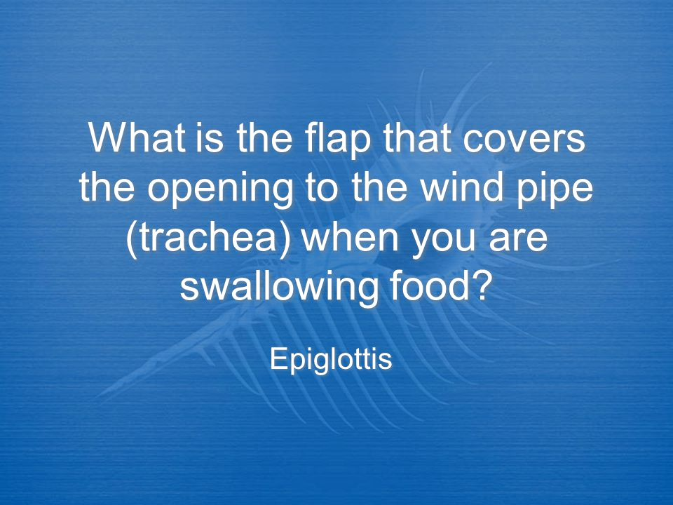 What is the flap that covers the opening to the wind pipe (trachea) when you are swallowing food