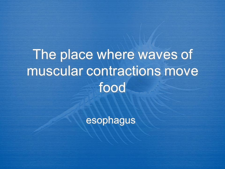 The place where waves of muscular contractions move food