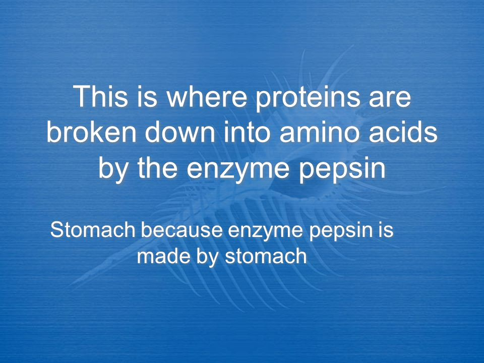 Stomach because enzyme pepsin is made by stomach