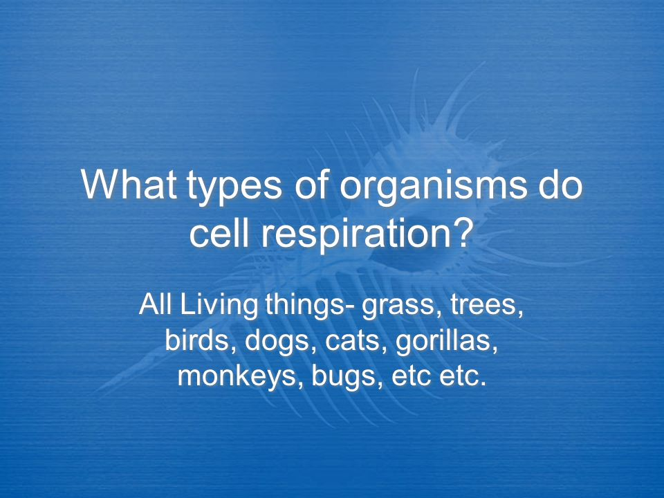 What types of organisms do cell respiration