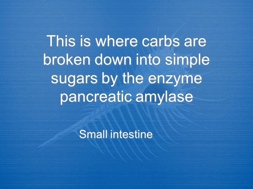 This is where carbs are broken down into simple sugars by the enzyme pancreatic amylase