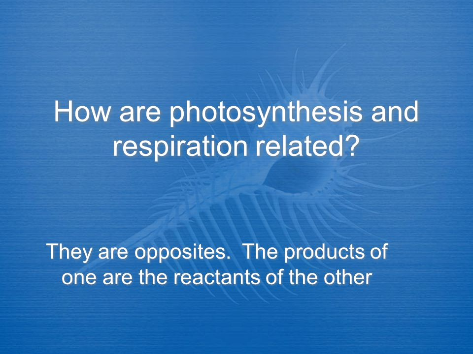 How are photosynthesis and respiration related