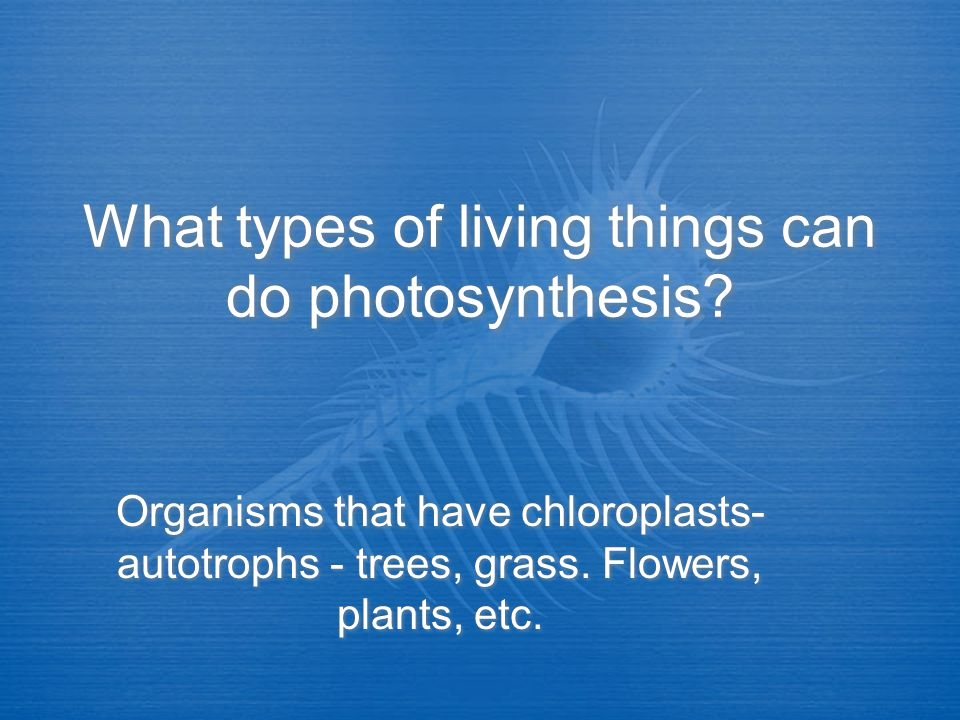 What types of living things can do photosynthesis