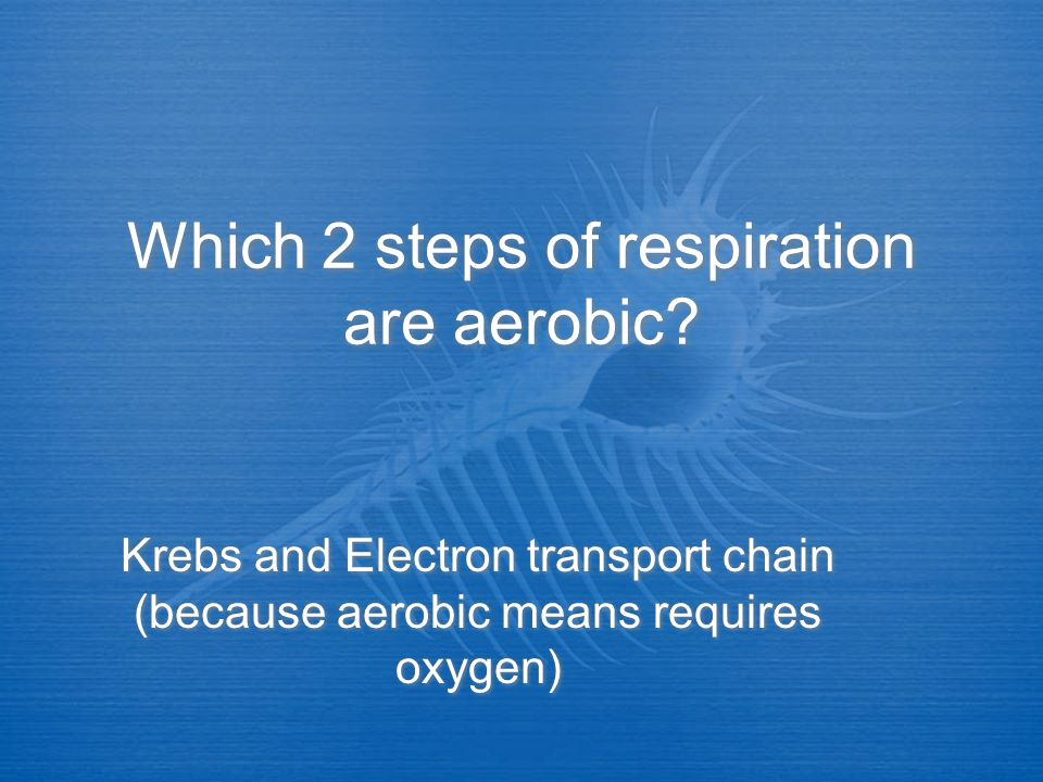 Which 2 steps of respiration are aerobic