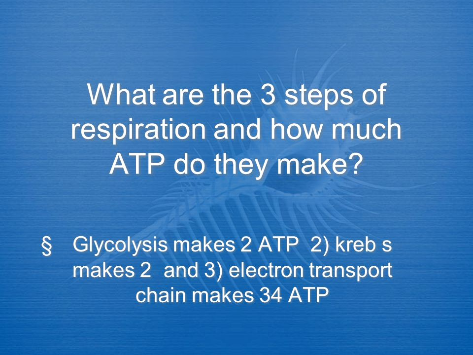 What are the 3 steps of respiration and how much ATP do they make
