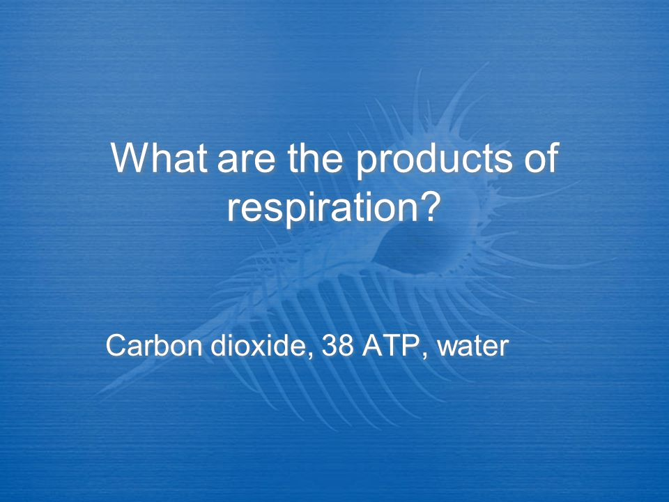 What are the products of respiration