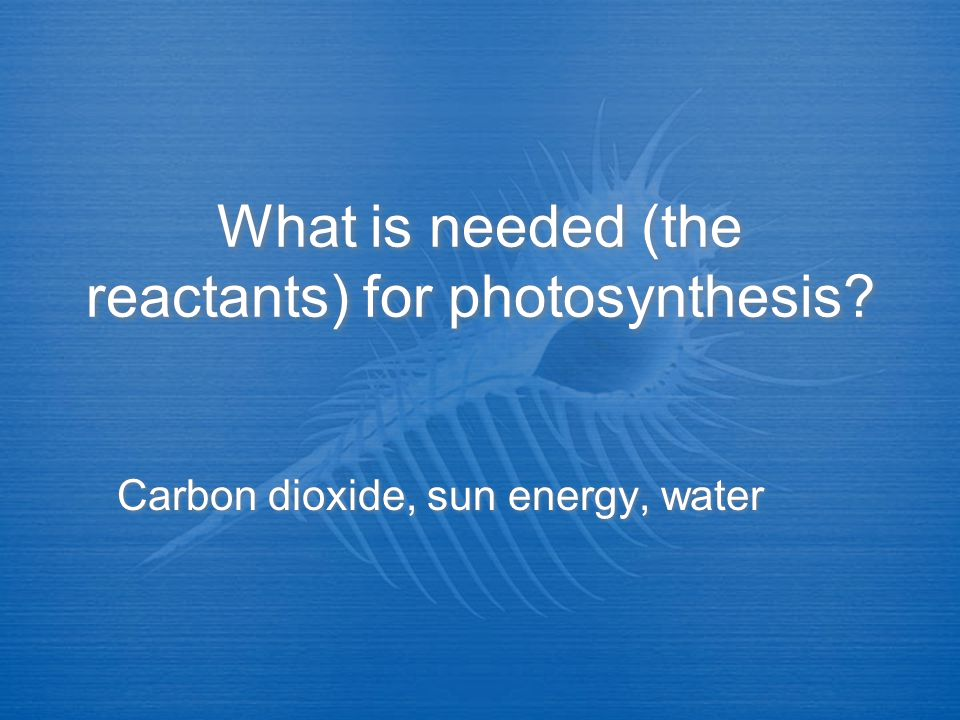 What is needed (the reactants) for photosynthesis