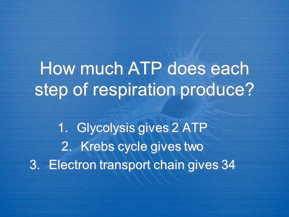 How much ATP does each step of respiration produce