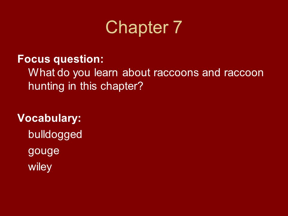 Chapter 7 Focus question: What do you learn about raccoons and raccoon hunting in this chapter Vocabulary: