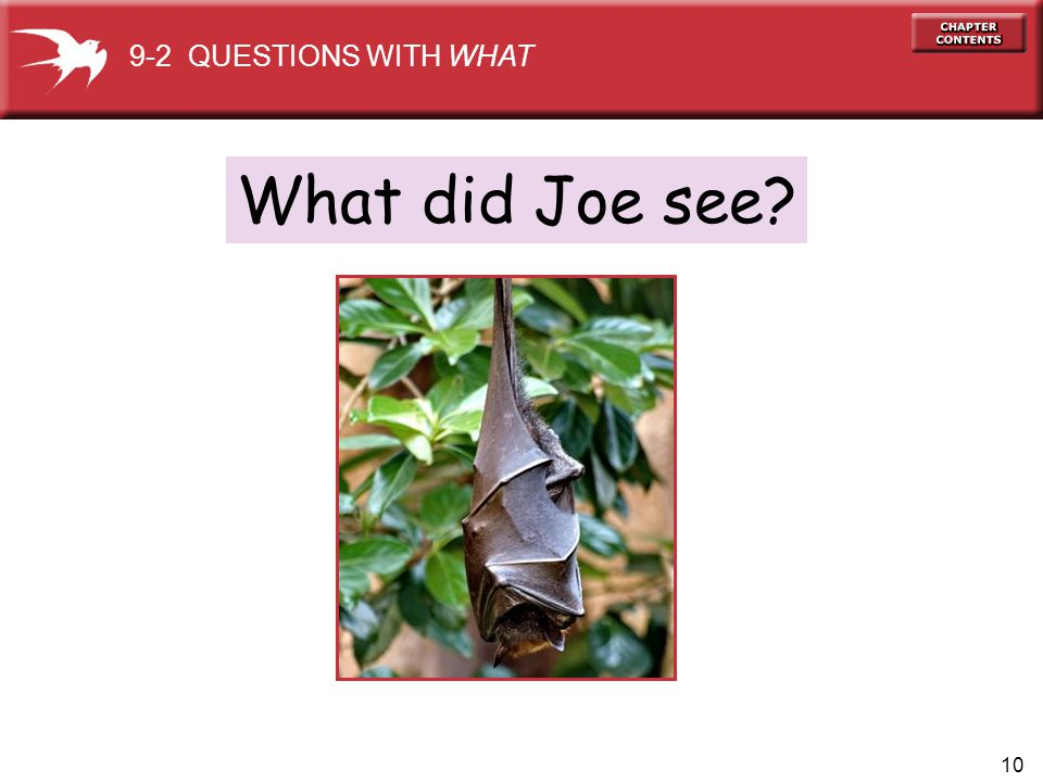 9-2 QUESTIONS WITH WHAT What did Joe see