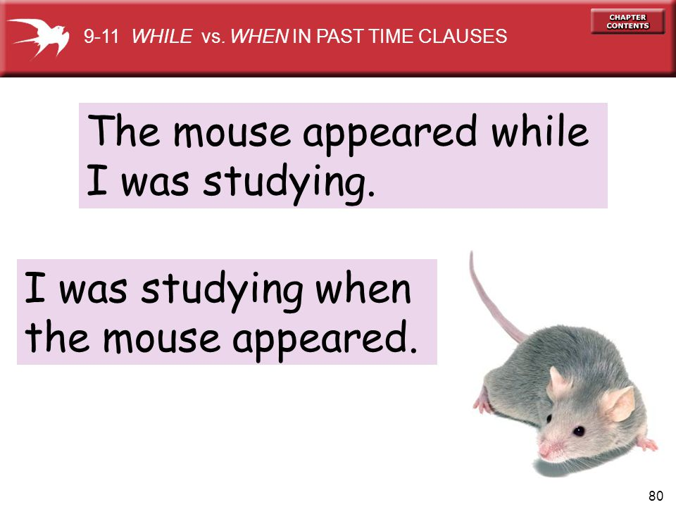 The mouse appeared while I was studying.
