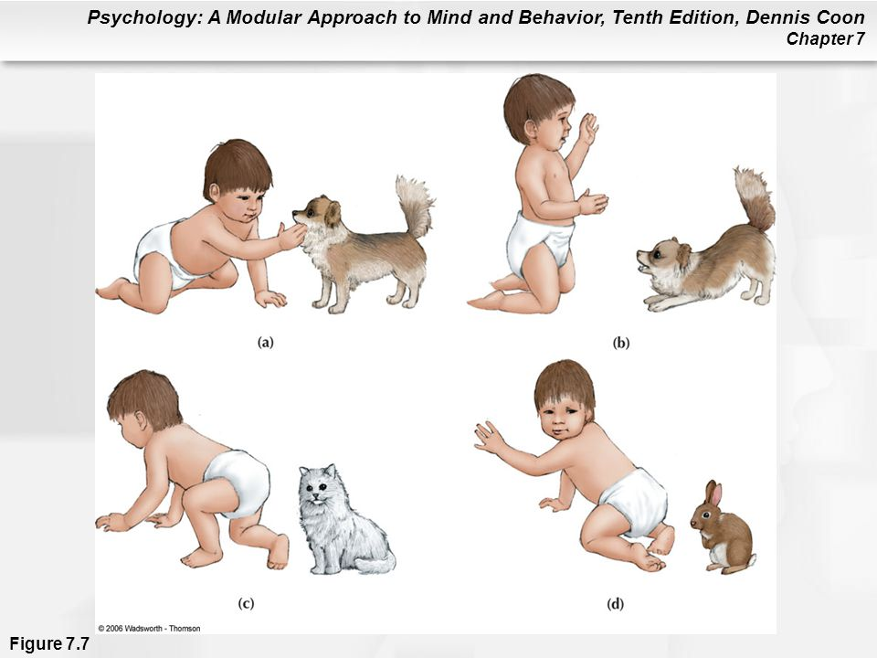 Figure 7.7 Hypothetical example of a conditioned emotional response (CER) becoming a phobia. Child approaches dog (a) and is frightened by it (b). Fear generalizes to other household pets (c) and later to virtually all furry animals (d).