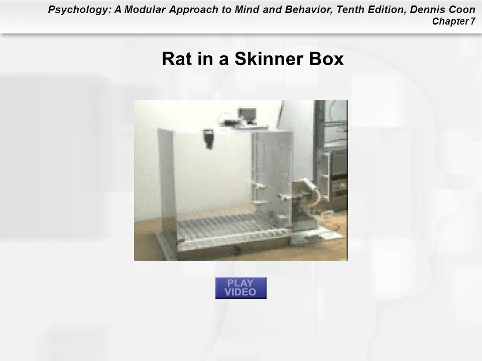 Rat in a Skinner Box