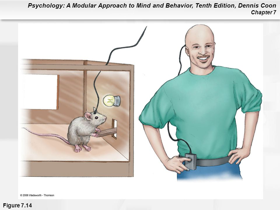 Figure 7.14 In the apparatus shown in (a), the rat can press a bar to deliver mild electric stimulation to a pleasure center in the brain. Humans also have been wired for brain stimulation, as shown in (b). However, in humans, this has been done only as an experimental way to restrain uncontrollable outbursts of violence. Implants have not been done merely to produce pleasure.