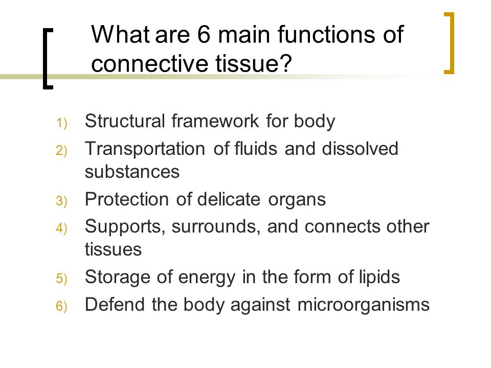 What are 6 main functions of connective tissue