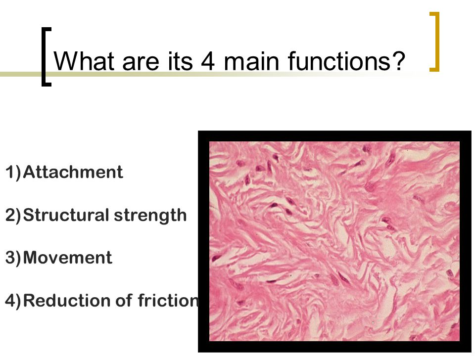 What are its 4 main functions