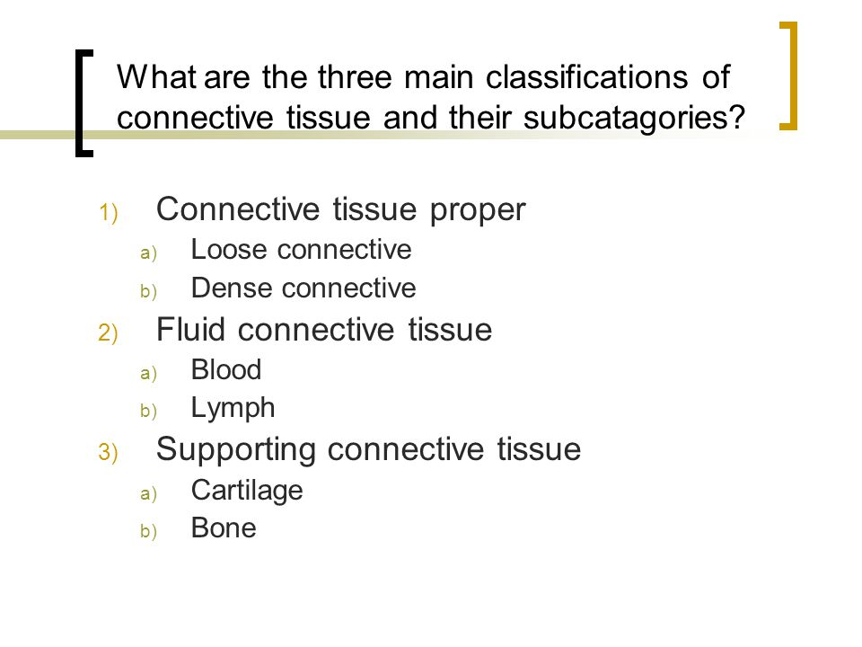 Connective tissue proper