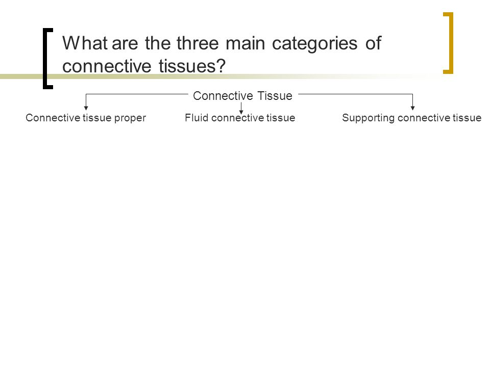 What are the three main categories of connective tissues