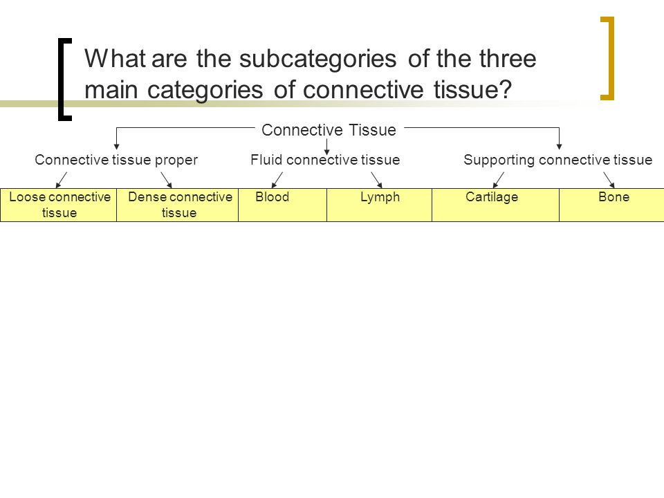What are the subcategories of the three main categories of connective tissue