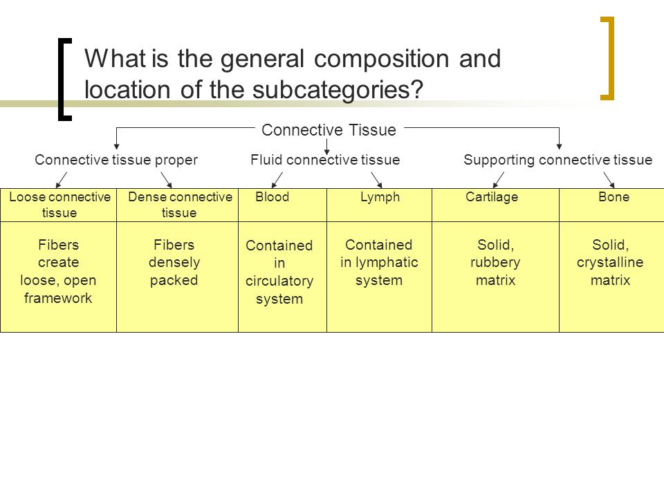 What is the general composition and location of the subcategories