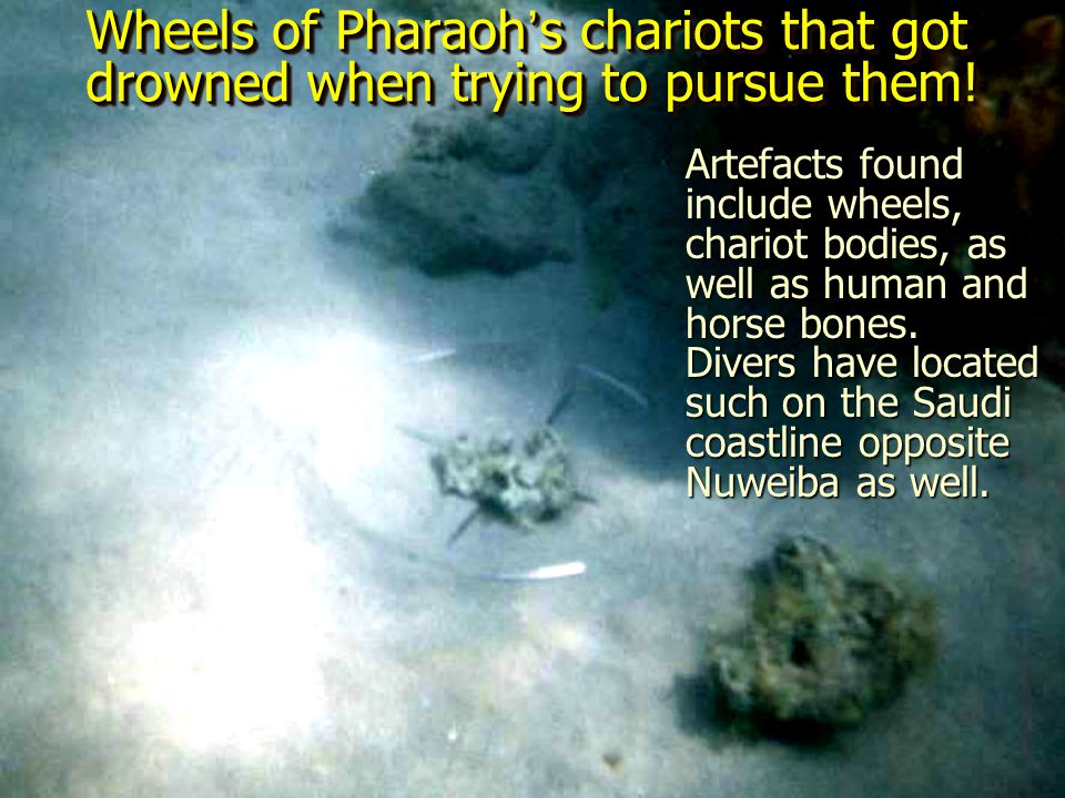 Wheels of Pharaoh's chariots that got drowned when trying to pursue them!