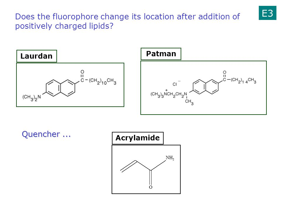 E3 Does the fluorophore change its location after addition of positively charged lipids Patman. Laurdan.
