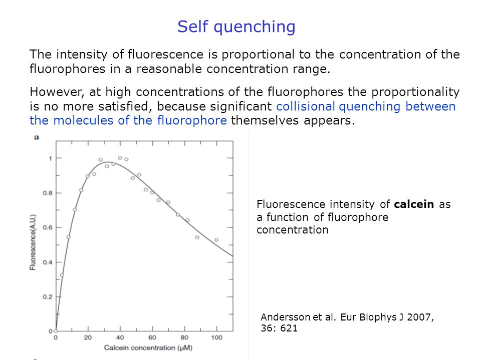 Self quenching The intensity of fluorescence is proportional to the concentration of the fluorophores in a reasonable concentration range.