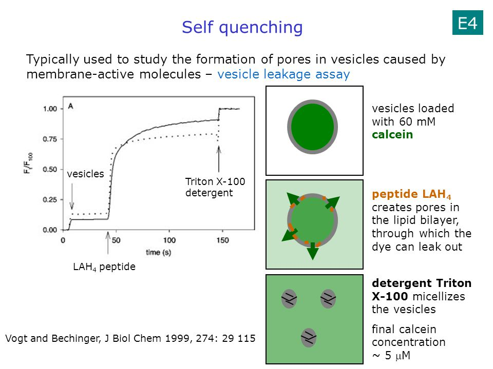 E4 Self quenching. Typically used to study the formation of pores in vesicles caused by membrane-active molecules – vesicle leakage assay.