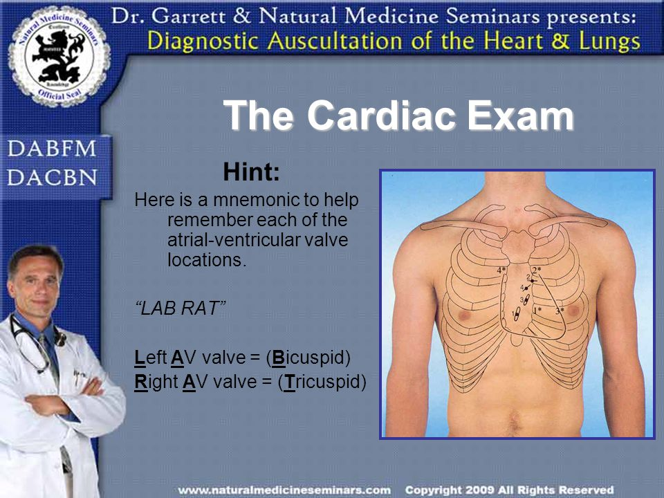 The Cardiac Exam Hint: Here is a mnemonic to help remember each of the atrial-ventricular valve locations.