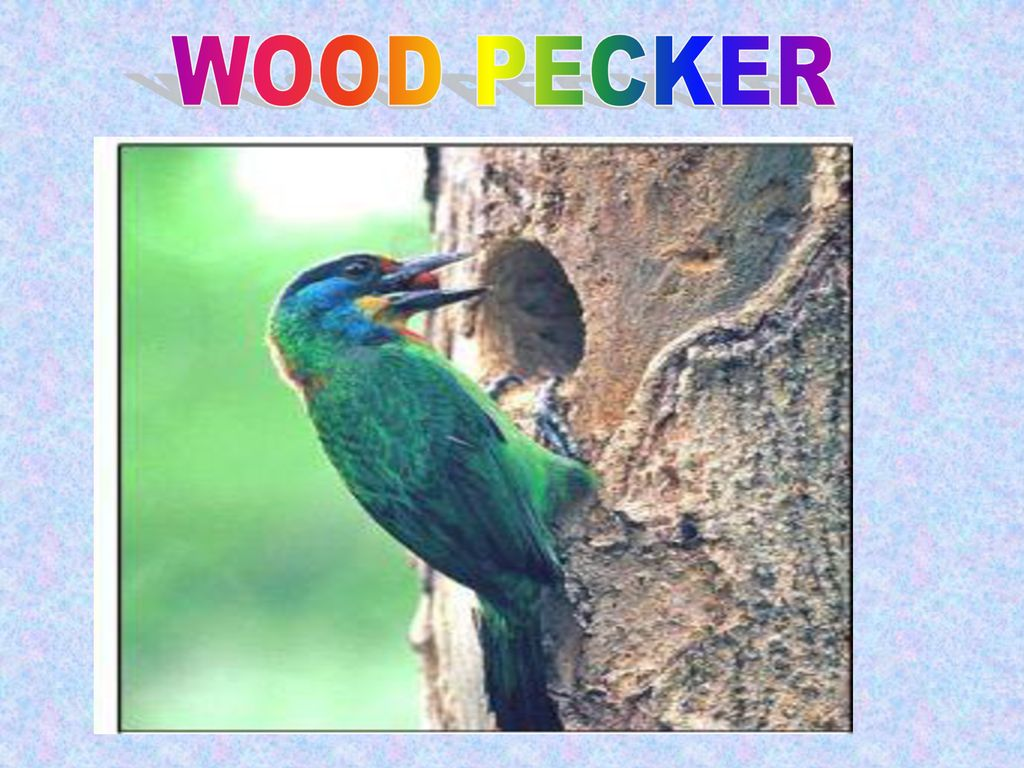 WOOD PECKER