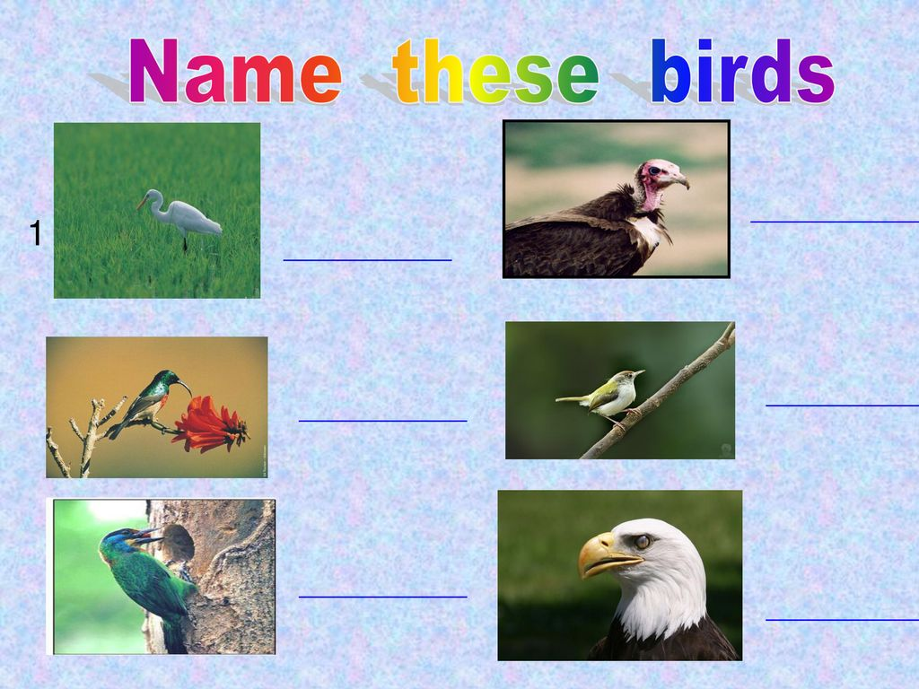 Name these birds 1