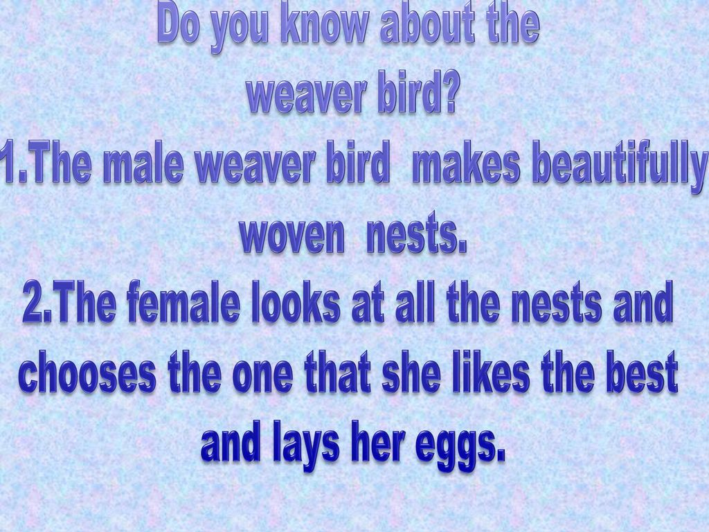 1.The male weaver bird makes beautifully woven nests.