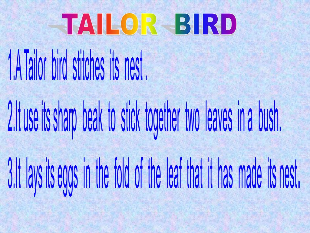 TAILOR BIRD 1.A Tailor bird stitches its nest .