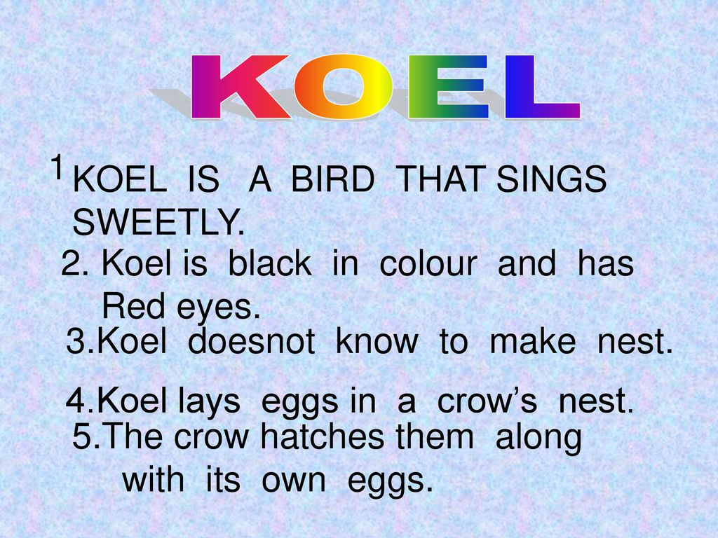 KOEL 1 . KOEL IS A BIRD THAT SINGS. SWEETLY. 2. Koel is black in colour and has. Red eyes.