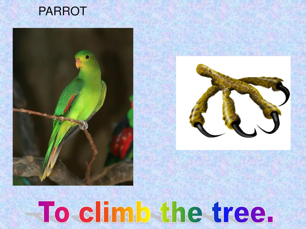 PARROT To climb the tree.