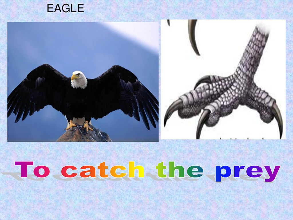 EAGLE To catch the prey