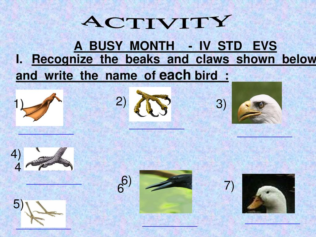 ACTIVITY A BUSY MONTH - IV STD EVS