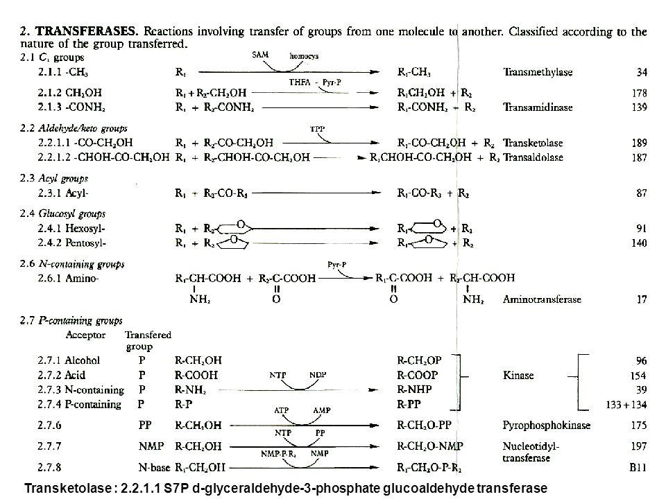 Transketolase : 2.2.1.1 S7P d-glyceraldehyde-3-phosphate glucoaldehyde transferase