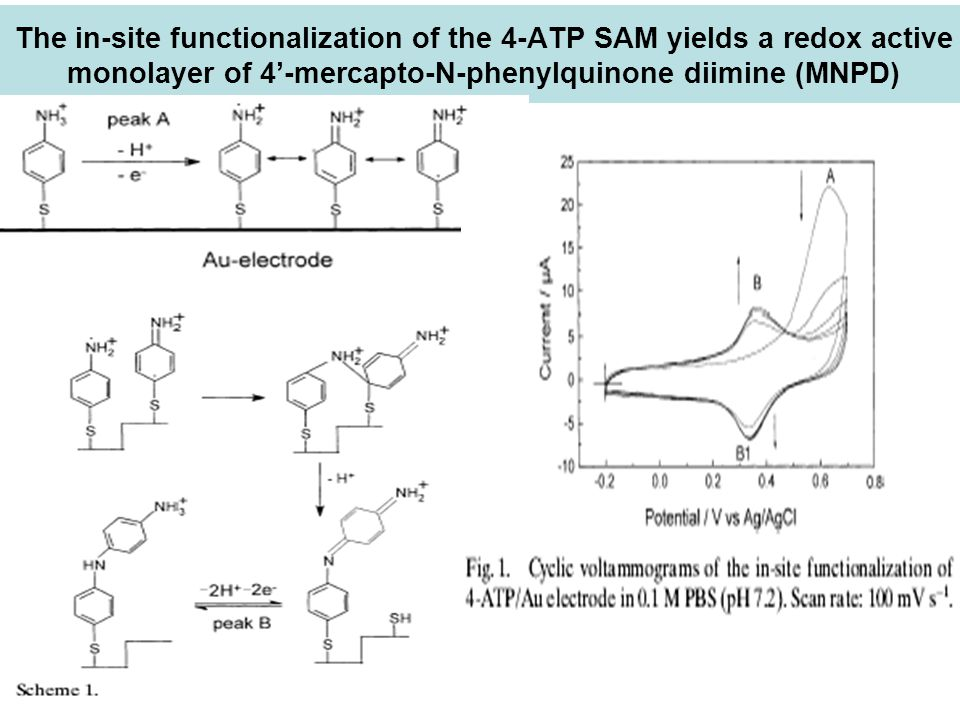 The in-site functionalization of the 4-ATP SAM yields a redox active monolayer of 4'-mercapto-N-phenylquinone diimine (MNPD)