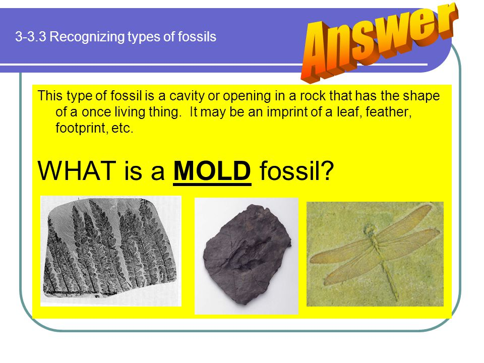 3-3.3 Recognizing types of fossils