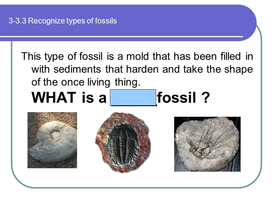 3-3.3 Recognize types of fossils